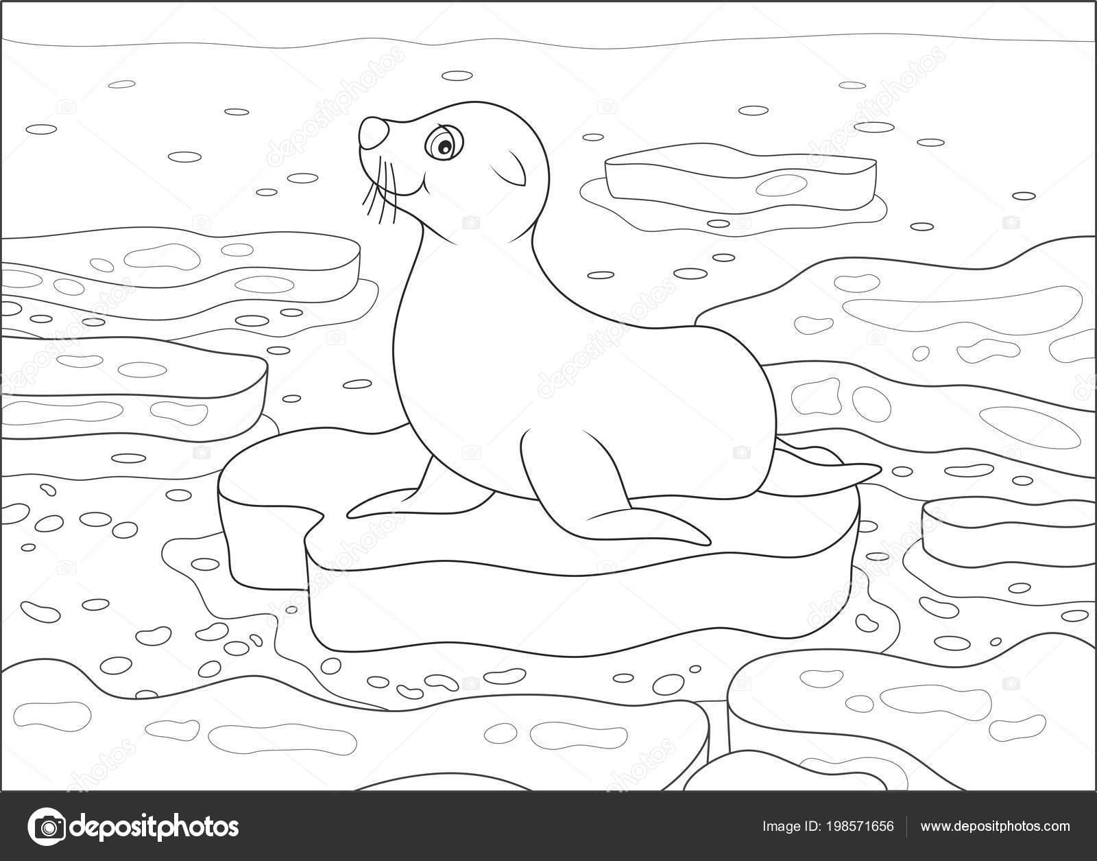 подпиши рисунки тюлень на льдине когда нибудь море