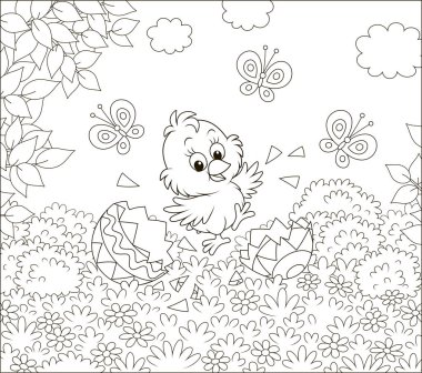 Happy just hatched little chick dancing over shells of a colored Easter egg on grass among flowers on a sunny spring day, black and white vector illustration in a cartoon style for a coloring book