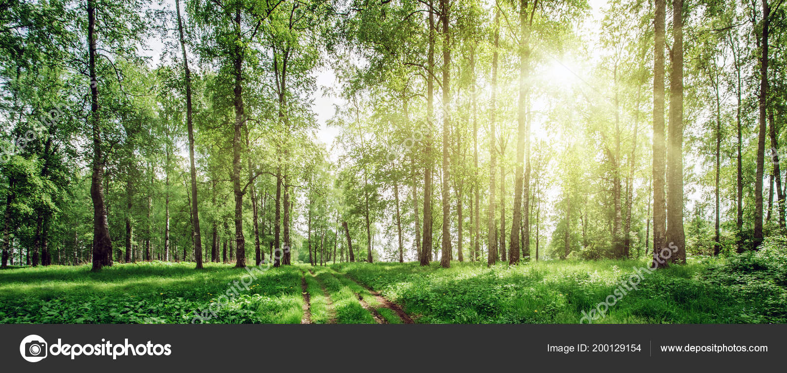 Beautiful Forest Background Stock Photo C 1xpert 200129154