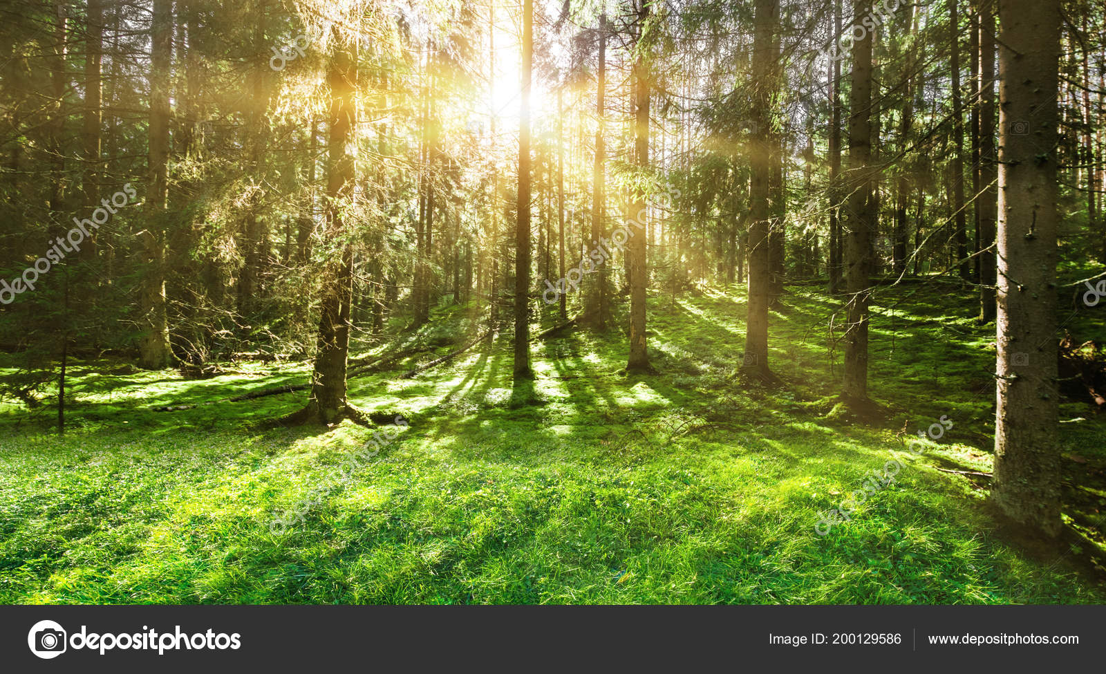 Orman Doğa Arka Plan Stok Foto 1xpert 200129586