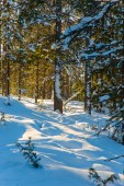 Frosty winter day and transparent cold air of in a snow-covered forest. Christmas in the Arctic. Concept of active and ecological tourism