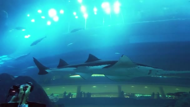 People admire the marine life in the glass tunnel of the Aquarium in Dubai Mall stock footage video