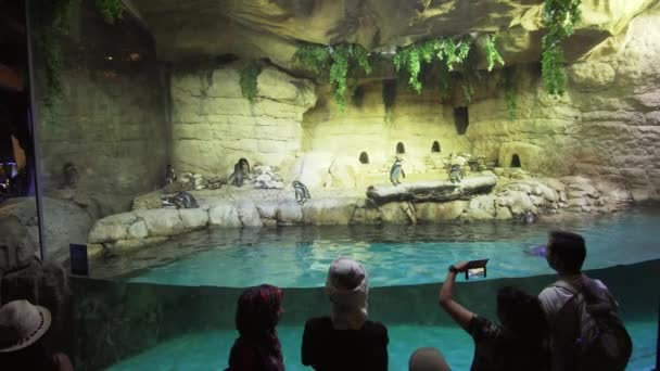 Dubai, UAE - April 09, 2018: People are watching the penguins in the Underwater Zoo in Dubai Mall stock footage video