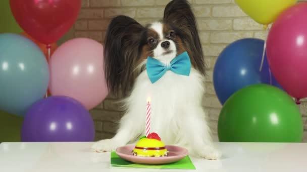 Elegáns kutya Ízlelő szemölcsös ül egy asztalnál egy születésnapi torta gyertya stock footage videóinak