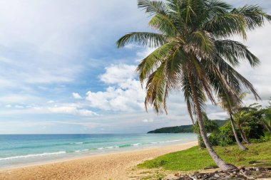 Tropical beach with palms and bright sand. Summer sea vacation and travel concept