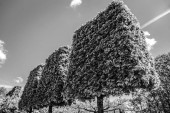 Kvetoucí Park Evropské prvky. Černo bílé fotografie.