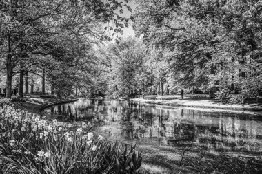 Blooming European Park elements. Black-white photo. stock vector