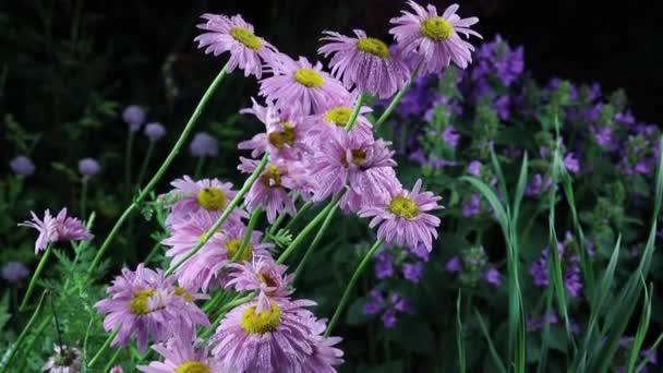 Krásné letní zahrada květiny close-up.