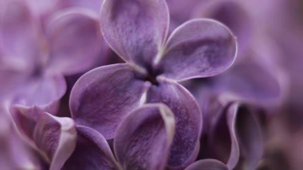 Schöne Sommergartenblumen aus nächster Nähe. 4K-Filmmaterial.