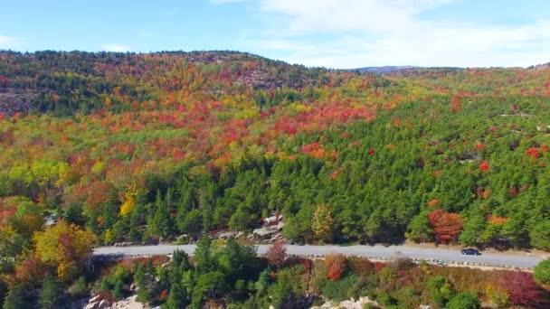 panoramic aerial view of colorful forest in autumn