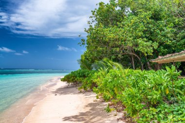 Seychelles beautiful beach with vegetation and trees.