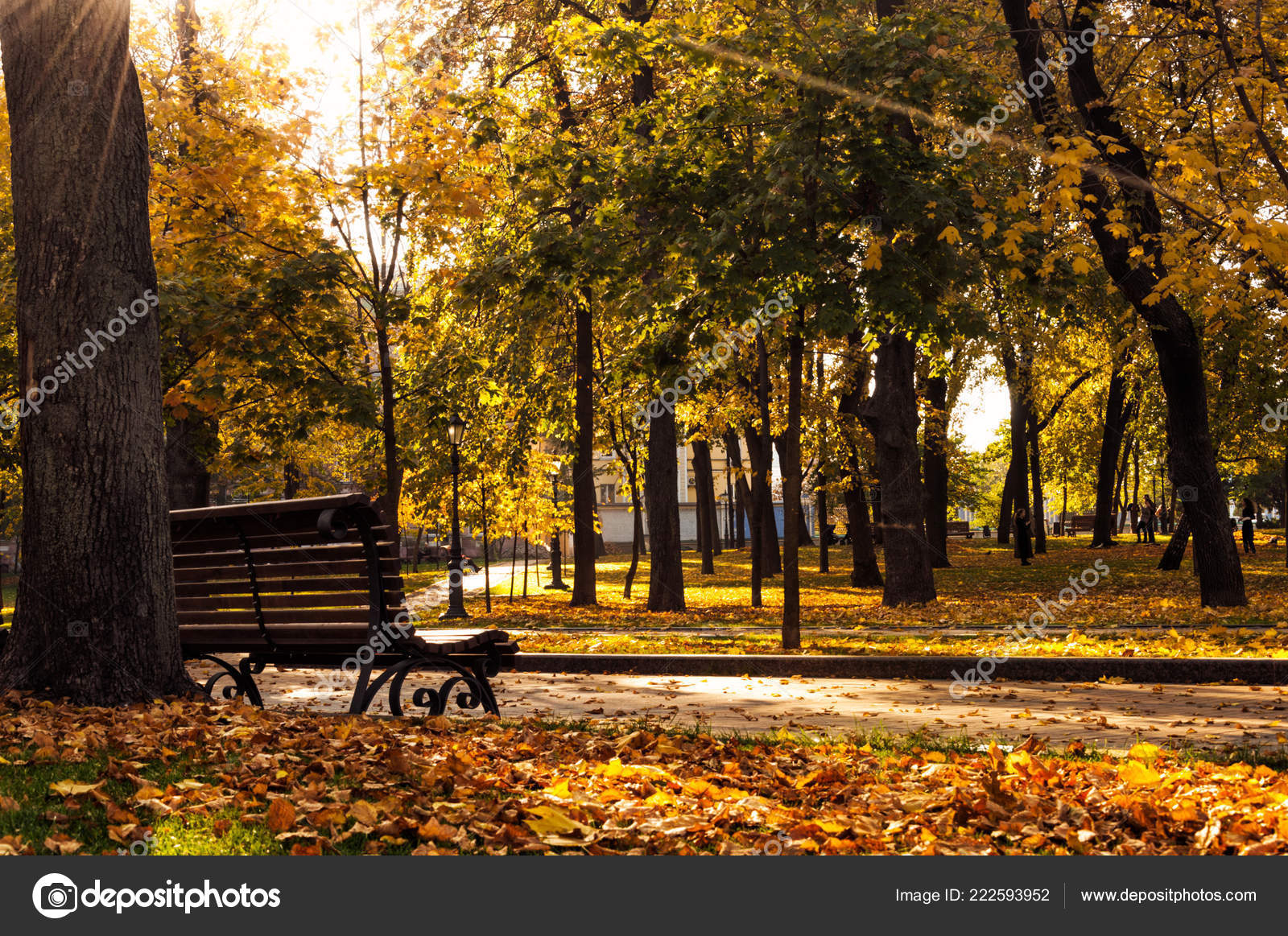 Wooden Bench Autumn Park Sunny Day Stock Photo