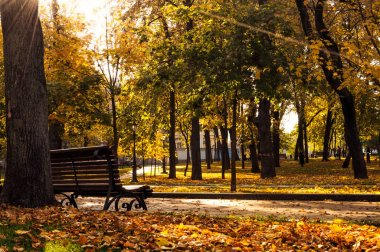 wooden bench in autumn park at sunny day