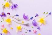 Fotografie Frühlingsblumen auf Papierhintergrund