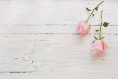 pink roses on white wooden background