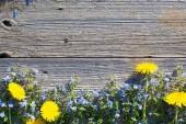 Fotografie modré a žluté květy na staré dřevěné pozadí