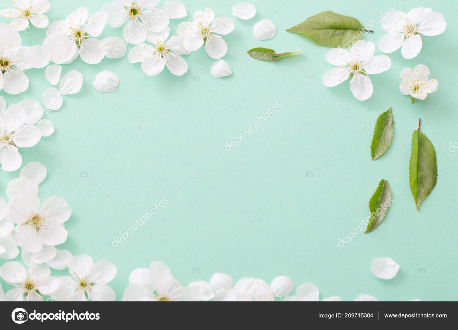 Cherry Flowers Paper Background Stock Photo Kruchenkova 209715304