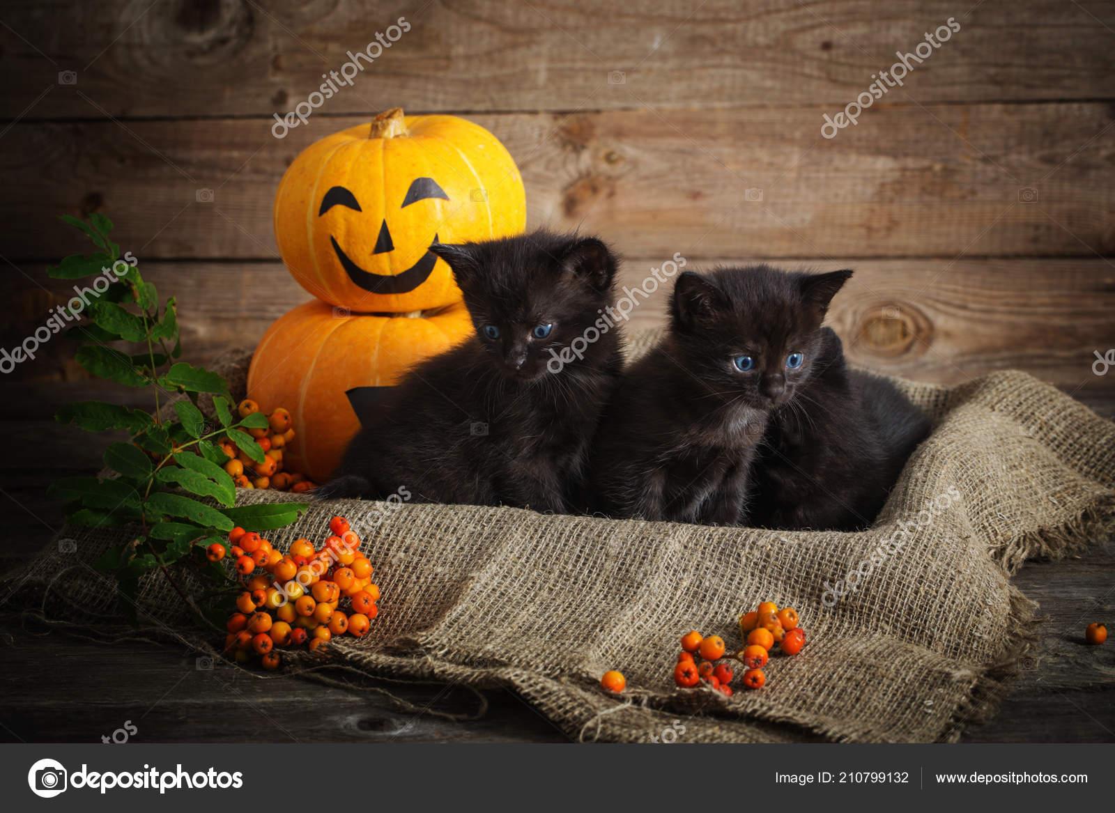 jak je černá kočička