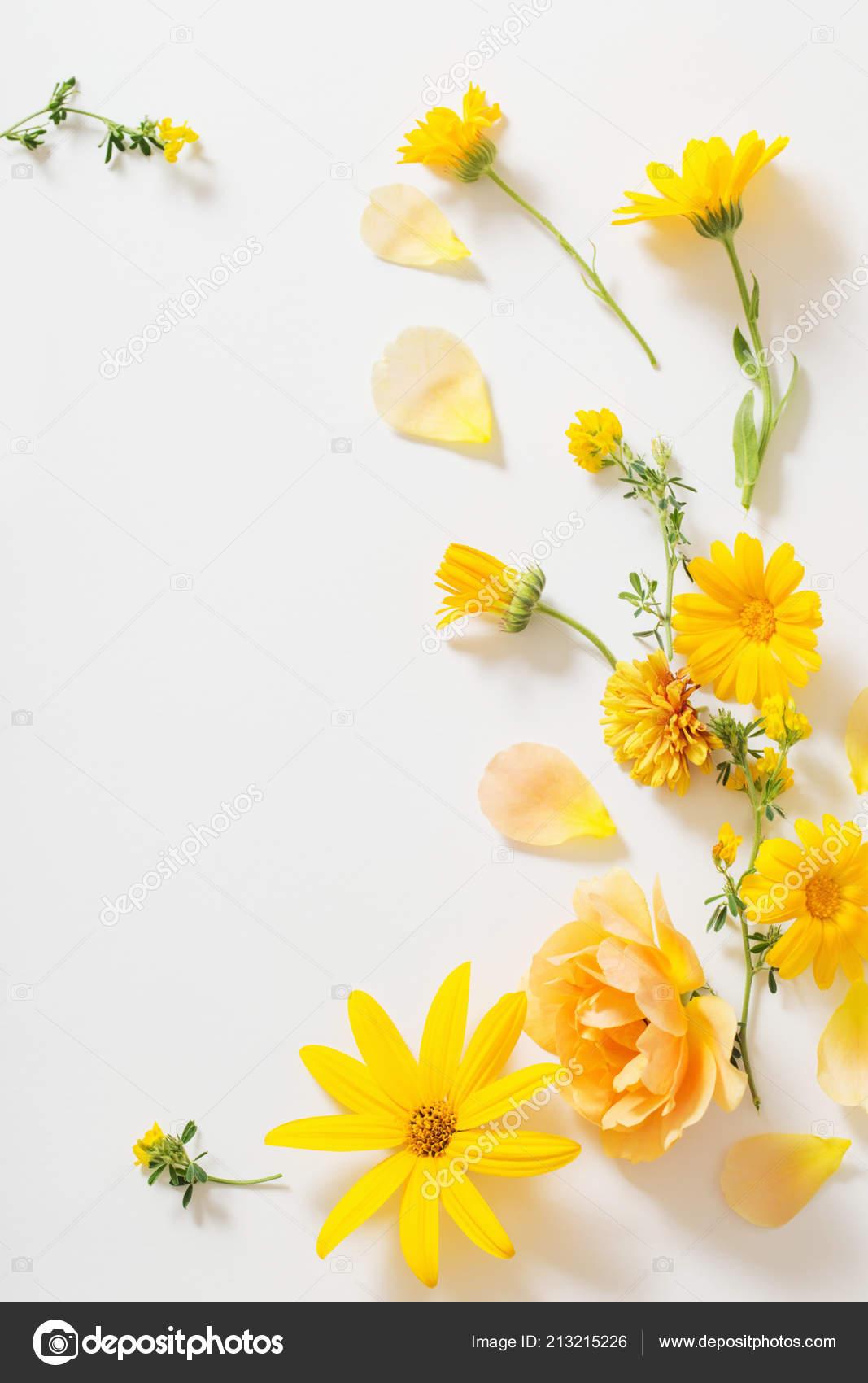 Yellow Flowers White Background — Stock Photo ...