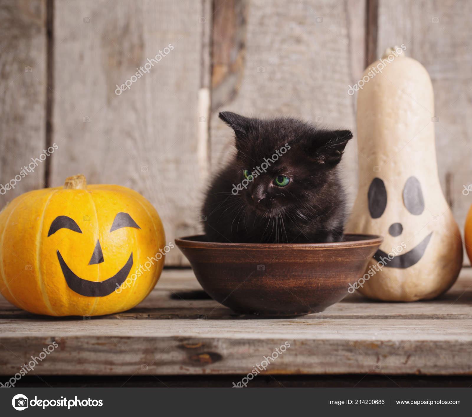 Černá stará kočička com