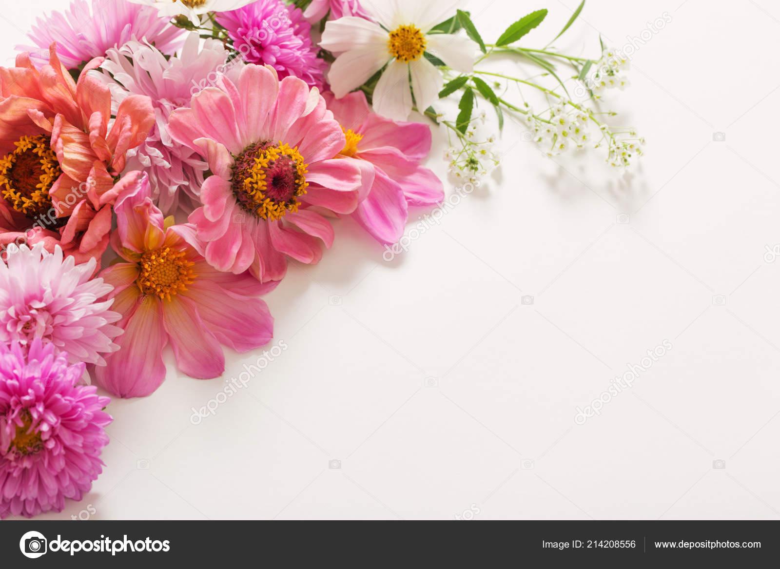 Beautiful Pink Flowers White Background Stock Photo Kruchenkova