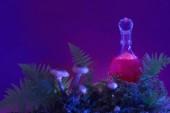 Rózsaszín varázsitalt palackban erdő