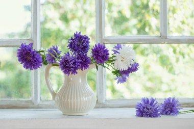 beautiful purple asters in  jug on  windowsill
