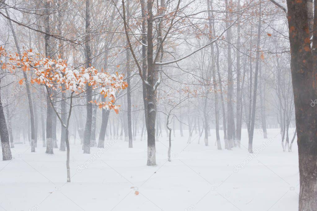 Autumn park under first snow