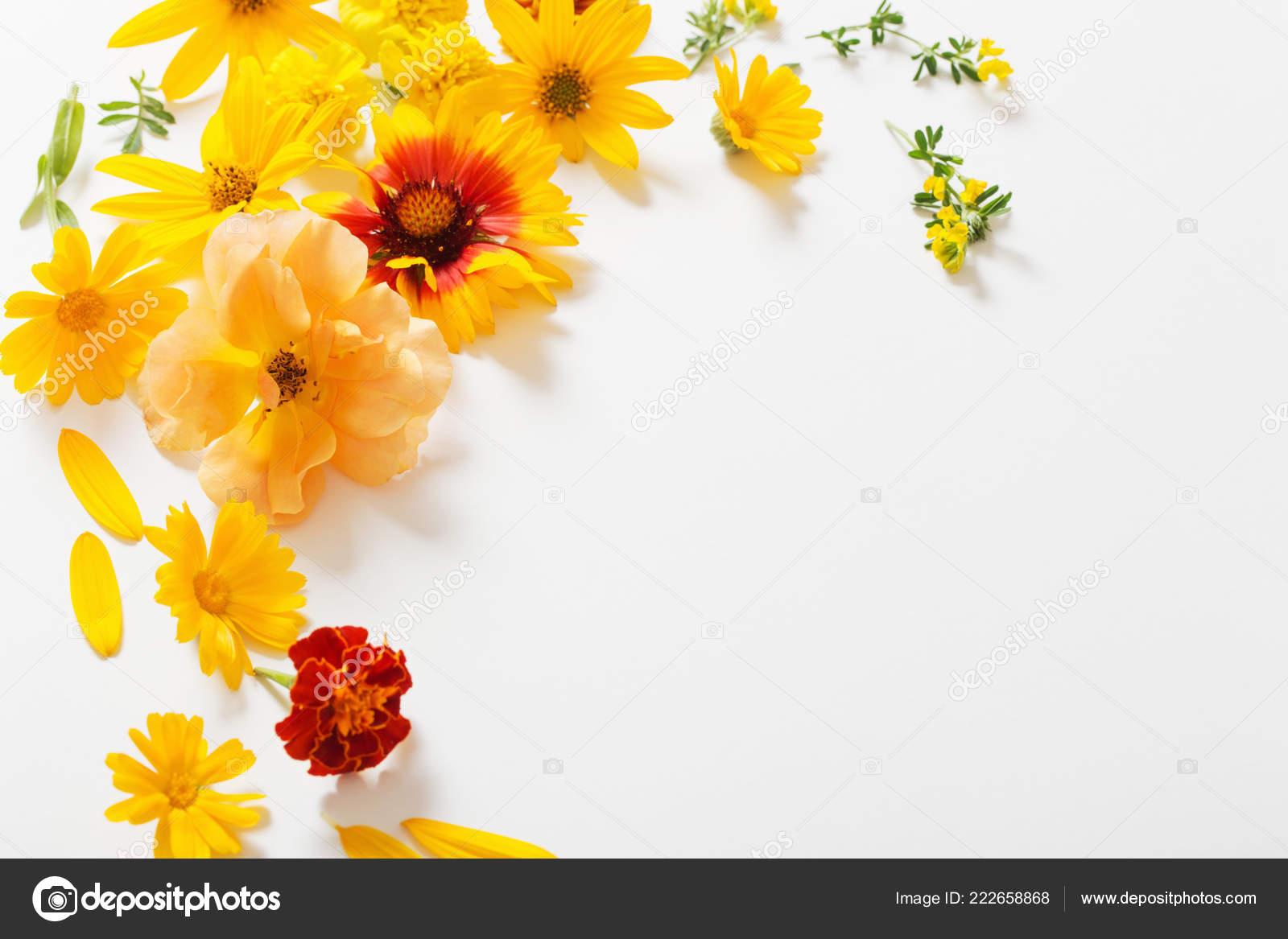 Yellow Orange Flowers White Background — Stock Photo ...