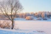 zimní ráno s sníh a mráz