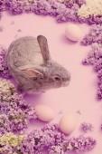 Fényképek nyuszi, tojás és a lila, a rózsaszín háttér