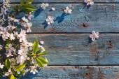 bílá jarní květiny na staré modré dřevěné pozadí