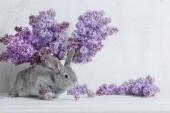 Fényképek Húsvéti nyúl, lila-a váza fehér háttér