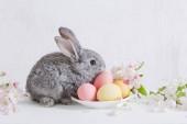 Fényképek nyuszi húsvét tojás, fehér háttér