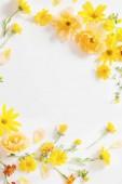 žluté a oranžové květy na bílém pozadí