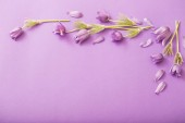 purple flowers on paper background