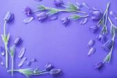 lila virágok a papír háttér