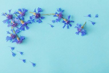 blue cornflowers on blue paper background