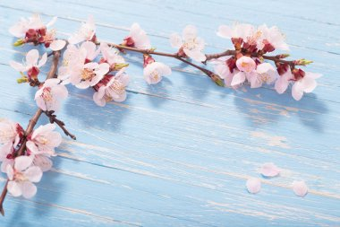 Pink cherry flowers on wooden background stock vector