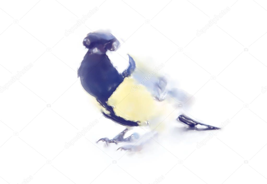 drawings watercolor style. Titmouse