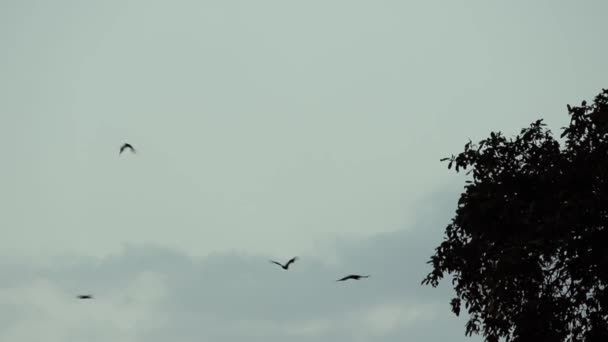 Flughunde fliegen am Morgen