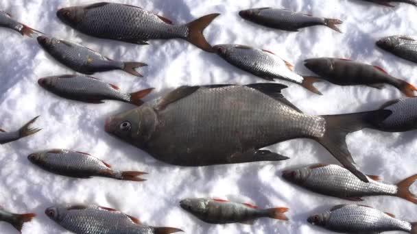 Fische liegen auf reinem weißen Schnee