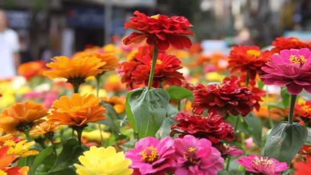 A körömvirág és más északi díszvirágok virágágyban nőnek
