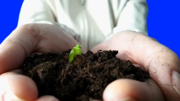 Sazenice rostou v rukou. Časová prodleva
