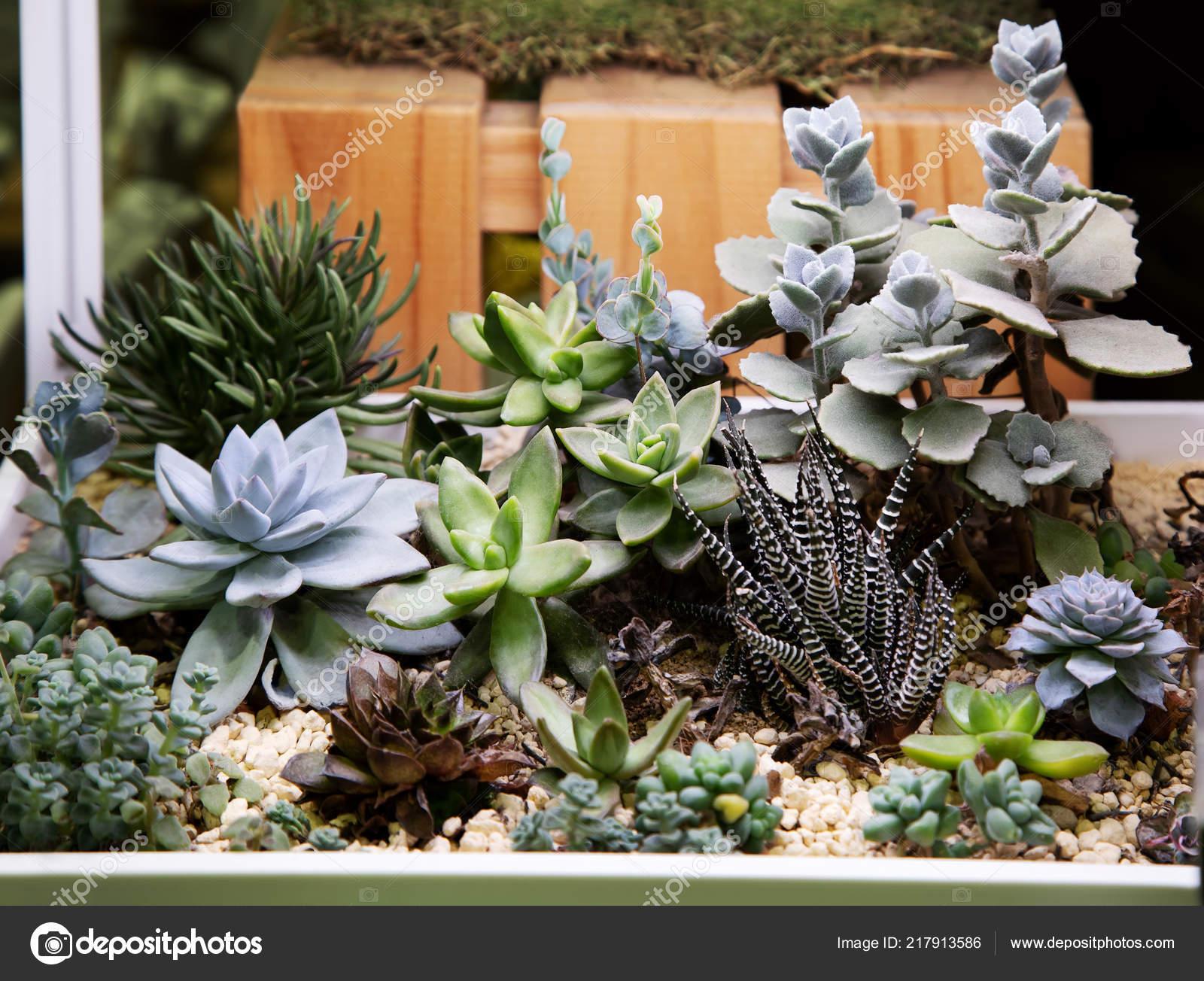 Collection Cactus Succulent Plants Pot Outdoor Potted Cactus House
