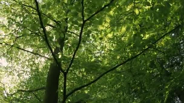 Zöld levelek, és a napfény