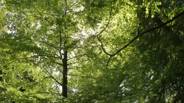 Zöld levelek, és a napfény vertigo