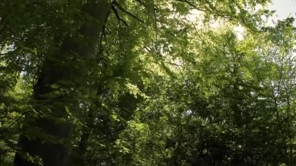Zelené listy a sluneční světlo vertigo