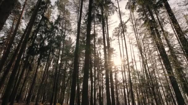 Waldspaziergang mit Sonnenstrahlen und Vogelgezwitscher