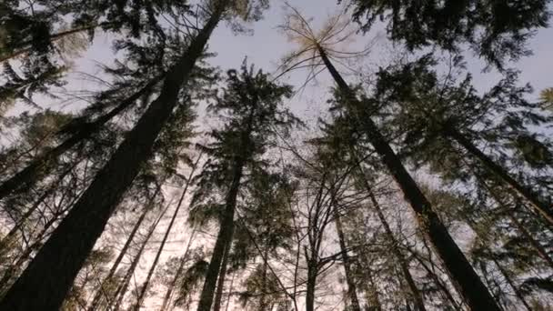 Forest Pines